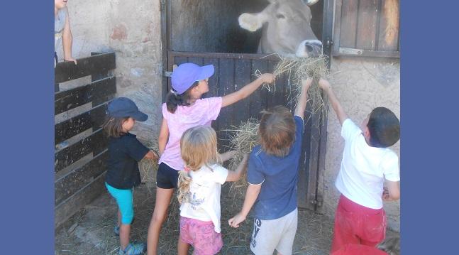 Fotografia de l'activitat CONEGUEU ELS ANIMALS DE LA GRANJA. VISITA GUIADA